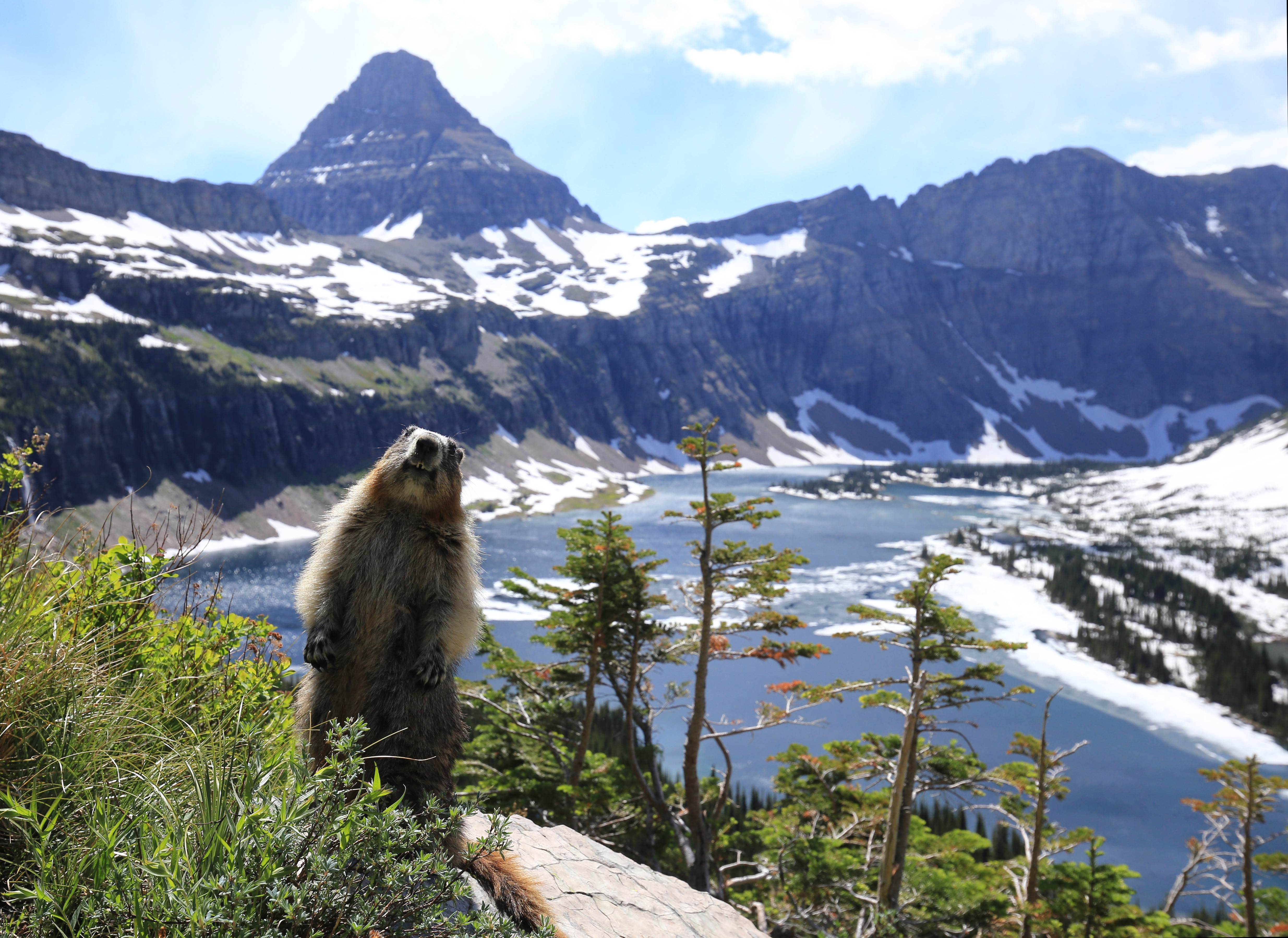 Marmot at Hidden Lake